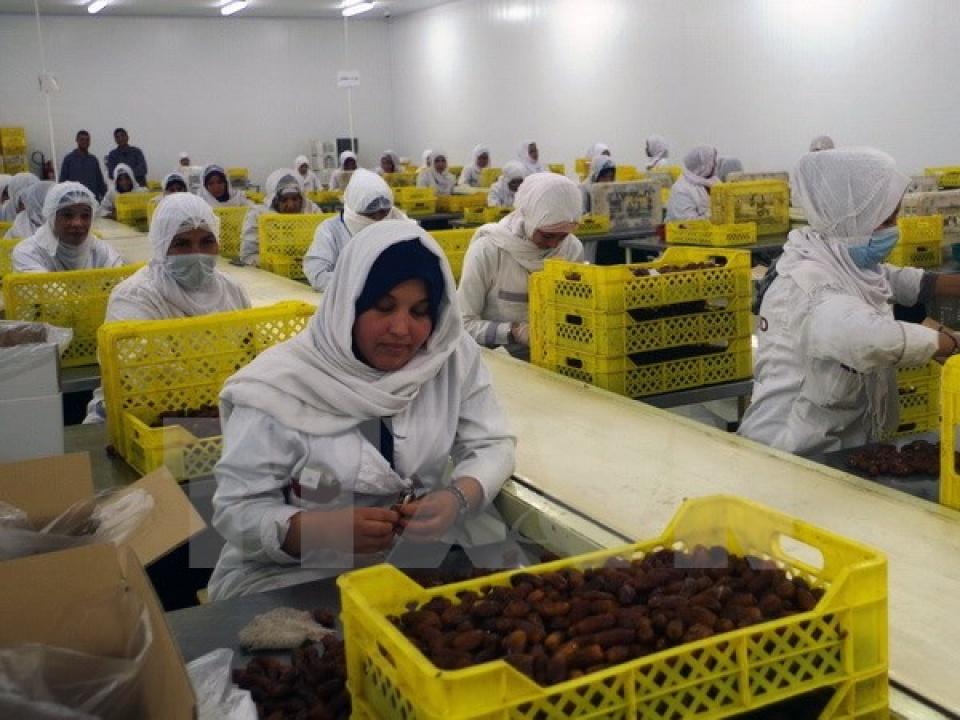 Công nhân chế biến quả chà là tại nhà máy ở Biskra